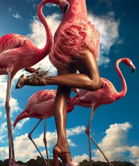 Fashionable with Flamingos!