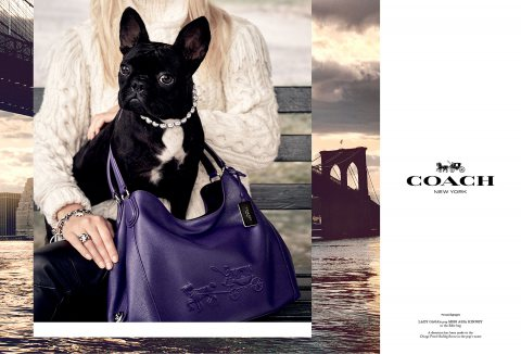 Lady Gaga's Dog Miss Asia Is the Star of Coach's New Campaig