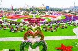 The Miracle Garden in Dubai