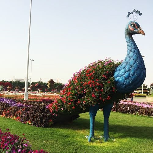 The Miracle Gardens Dubai